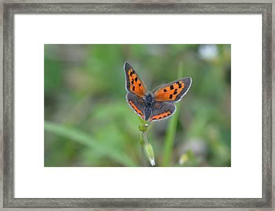 Bright Copper Framed Print