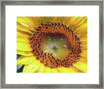 Bright Eyed And Bushy Tailed Framed Print by Christine Belt