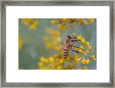 Bright Eyed Bee Framed Print