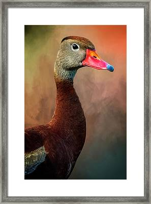 Bright-eyed Framed Print