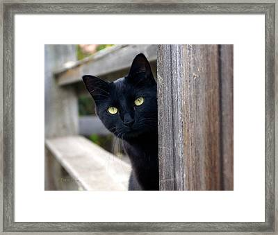 Bright Eyed Kitty Framed Print