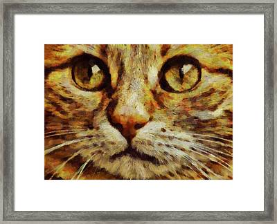 Bright Eyes By Pierre Blanchard Framed Print