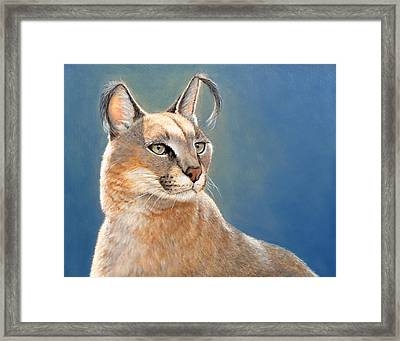 Bright Eyes - Caracal Framed Print