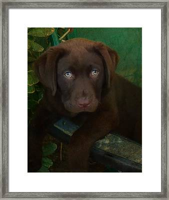 Bright Eyes Framed Print by Larry Marshall