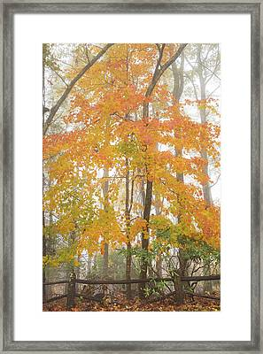 Bright Fall Framed Print by Sallie Woodring