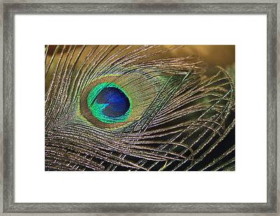Bright Feather Framed Print