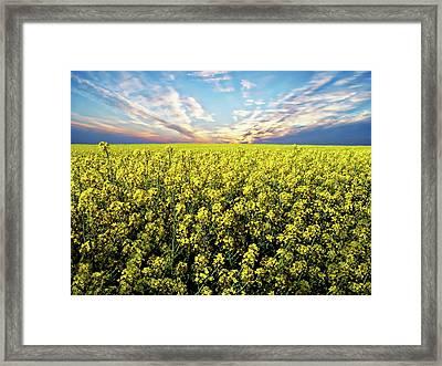 Bright Flowering Field Framed Print by Anthony Dezenzio