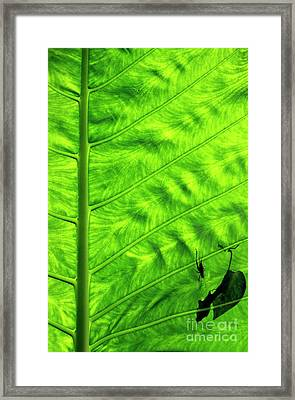Bright Green Leave With An Insect Crawling Over Its Surface Framed Print by Sami Sarkis
