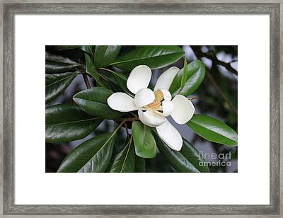 Bright Magnolia With Leaves Framed Print