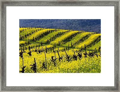 Bright Mustard Grass Framed Print by Garry Gay