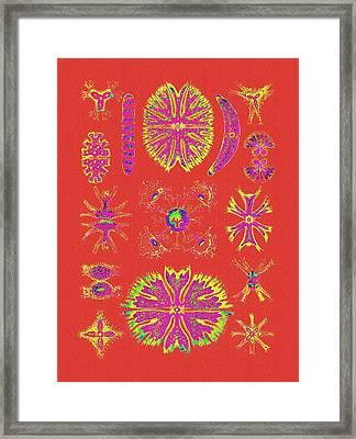 Bright Orange Algaes Framed Print by Diane Addis