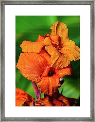 Bright Orange  Framed Print
