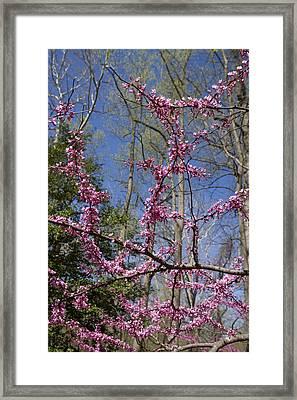 Bright Pink Rosebud Flowers Framed Print by Brendan Reals