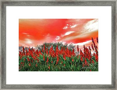 Framed Print featuring the photograph Bright Red Aloe Flowers By Kaye Menner by Kaye Menner