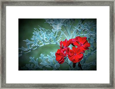 Bright Red Flower Blossom Against A Background Of Light Blue Leaves Framed Print by Randall Nyhof