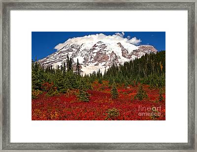 Bright Red In Paradise Valley Framed Print by Adam Jewell
