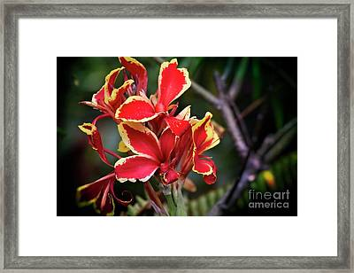 Framed Print featuring the photograph Bright Spot In My Day by Mary Machare