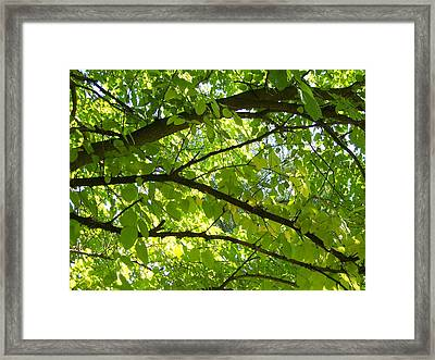Bright Treetop  Framed Print