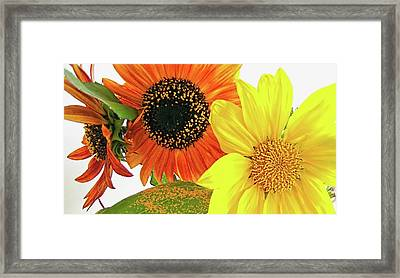 Bright Trio Framed Print by Kathy Bassett