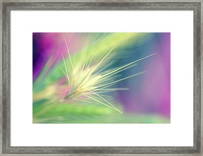 Bright Weed Framed Print by Terry Davis