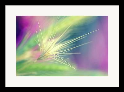 Abstract Weed Framed Prints
