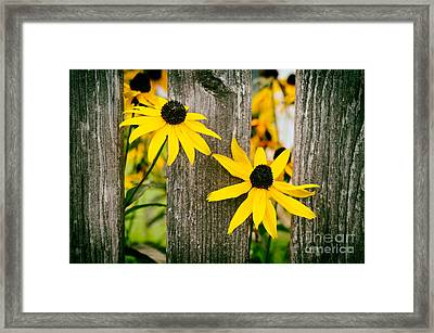Bright Yellow Autumn Flowers Framed Print by Sabine Jacobs