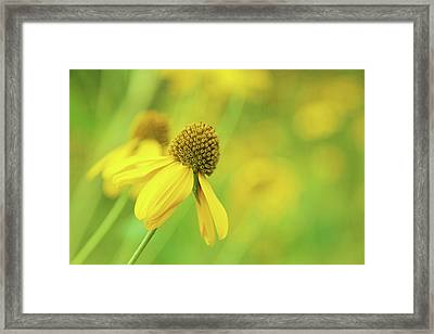 Bright Yellow Flower Framed Print