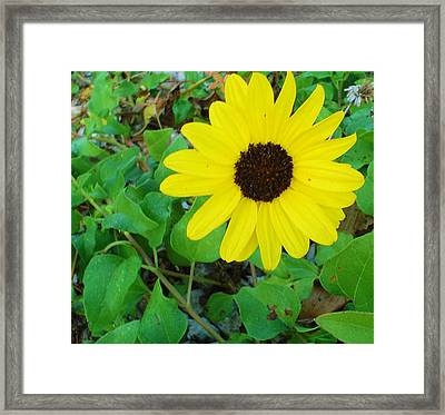 Bright Yellow Joy Framed Print