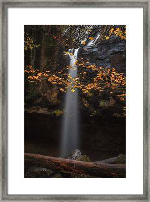 Brighten Up The Place Framed Print