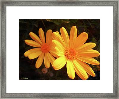 Brighten Your Day Framed Print by Michael Durst