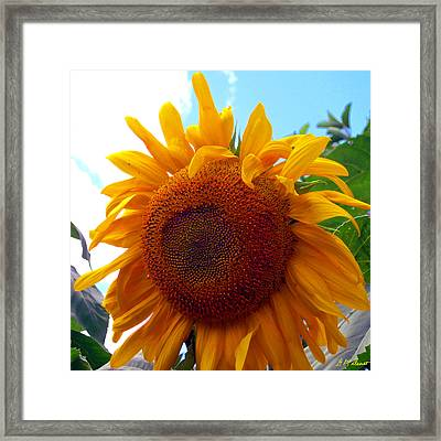 Brighter Days Ahead Framed Print by Michael Durst