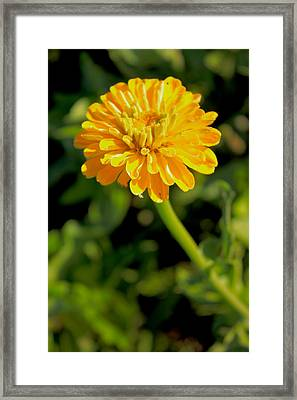 Brighter Days In Brighter Ways Framed Print by Christopher Phelps