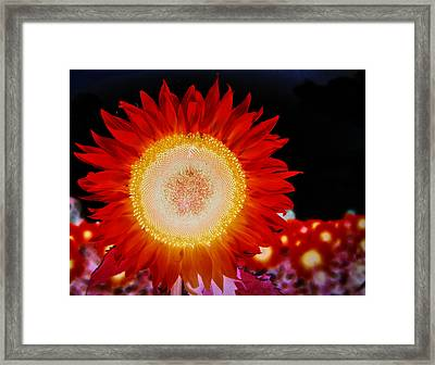 Brighter Than The Sun Flower Framed Print