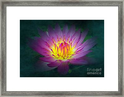 Brightly Glowing Lotus Flower Framed Print by Yali Shi