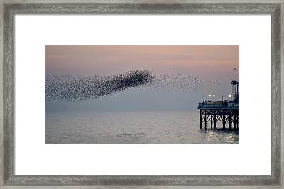 Brighton Starling Murmuration Framed Print by Simon Dack