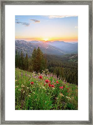 Brighton Wildflowers Framed Print
