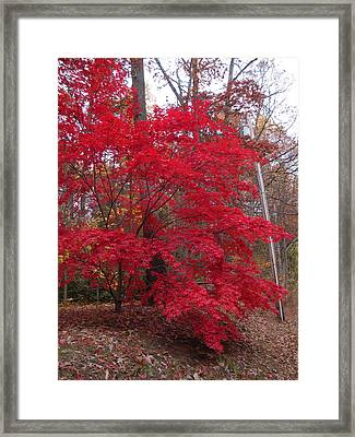 Brillance In The Forest Framed Print