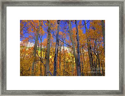 Brilliance Of Fall Framed Print by Barbara Schultheis