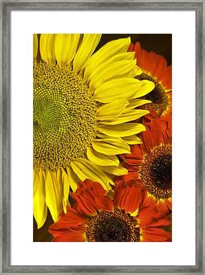 Framed Print featuring the photograph Brilliant Autumn by Elsa Marie Santoro
