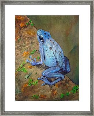 Brilliant Blue Poison Dart Frog Framed Print by Kerra Lindsey