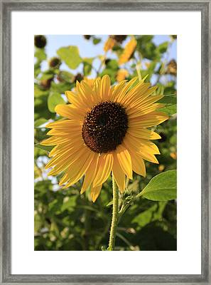 Brilliant By Association Framed Print by Alan Rutherford