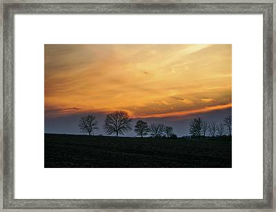 Brilliant Canopy Framed Print