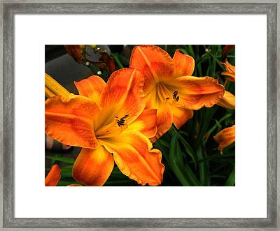 Brilliant Framed Print by Carol Sweetwood