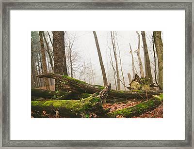 Brilliant Green Framed Print by Ashley Barber