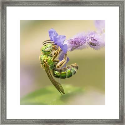 Brilliant Green Bee Framed Print