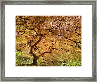 Framed Print featuring the photograph Brilliant Japanese Maple by Wanda Krack