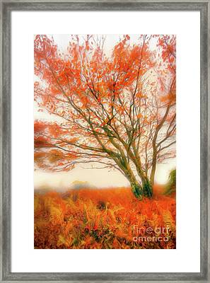 Framed Print featuring the painting Brilliant Orange Autumn Fall Colors Tree Ap by Dan Carmichael