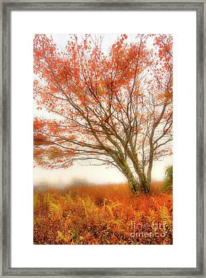 Framed Print featuring the photograph Brilliant Orange Autumn Fall Colors Tree by Dan Carmichael
