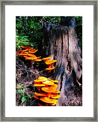 Brilliant Orange Framed Print
