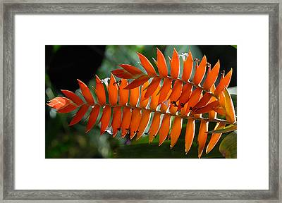 Brilliant Orange Nature Framed Print